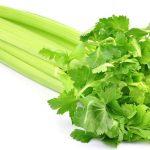 Сельдерей стеблевой и листовой – полезные свойства и вред, польза и противопоказания, корень