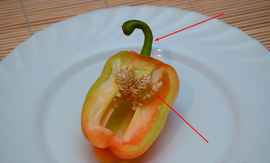 плодоножка и семечки болгарского перца