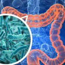 Наши друзья – бактерии