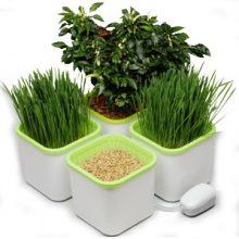 «Здоровья Клад» — гидропонный проращиватель семян