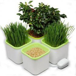 «Здоровья Клад» - гидропонный проращиватель семян, отзыв с фото, проращивание семян, подробный обзор